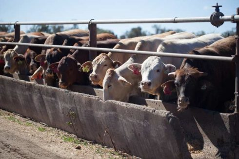 Hasil gambar untuk australian agricultural company aaco